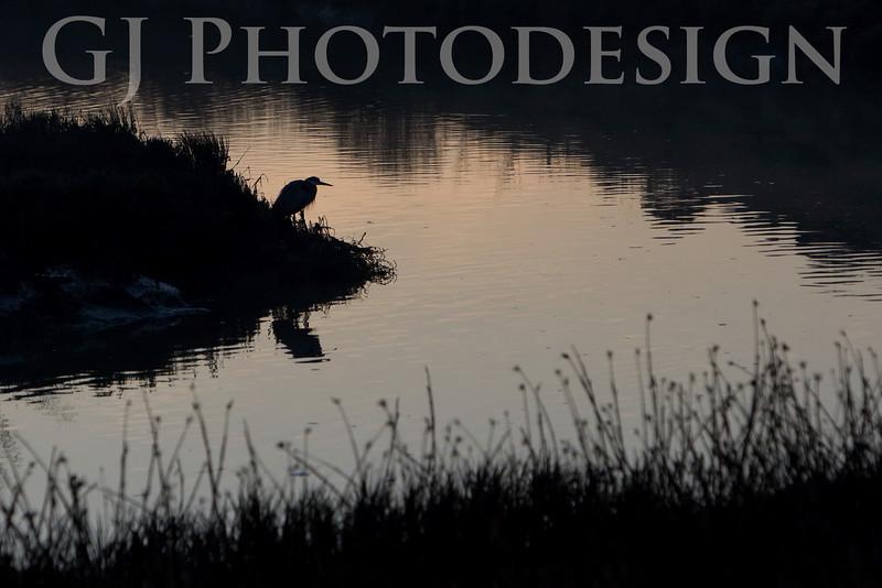 Blue Heron Silhouette<br /> Don Edwards National Wildlife Refuge<br /> 0811R-BHS1