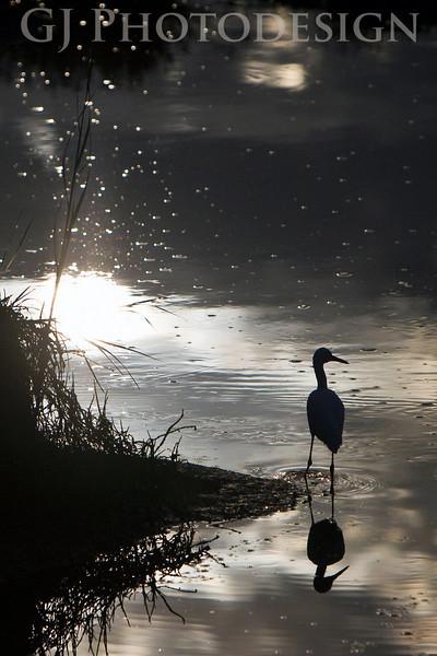 Don Edwards Nat'l Wildlife Refuge, Fremont, California<br /> 0807R-SER3