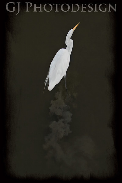 Great Egret Wades<br /> Don Edwards Nat'l Wildlife Refuge, Fremont, CA<br /> 0808R-GEW1
