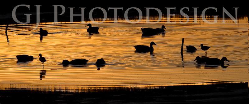 Don Edwards Nat'l Wildlife Refuge, Fremont, California<br /> 0811R-DS1