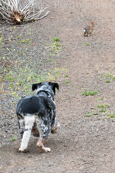 Reba and the Rabbit<br /> Don Edwards Natl Wildlife Refuge, Fremont, California<br /> May, 2009<br /> 0905R-R3