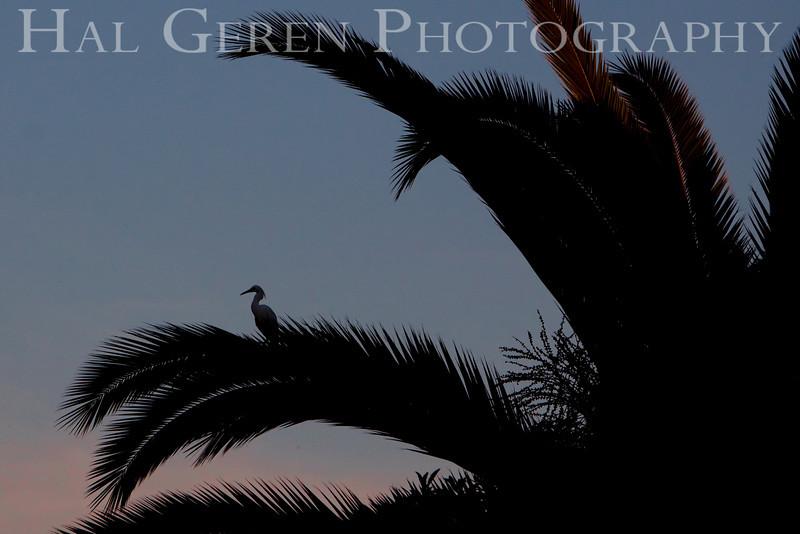 Snowy Egret Silhouette<br /> Don Edwards Natl Wildlife Refuge, Fremont, California<br /> 0904R-SEPOP1