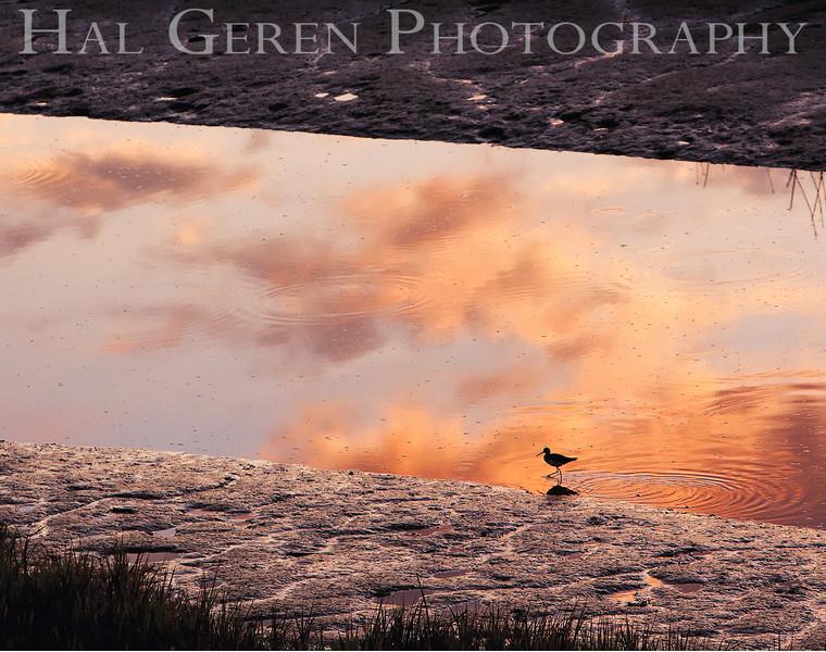Black Necked Stilt Silhouette<br /> Don Edwards Natl Wildlife Refuge, Fremont, California<br /> 0909R-BNSSIC