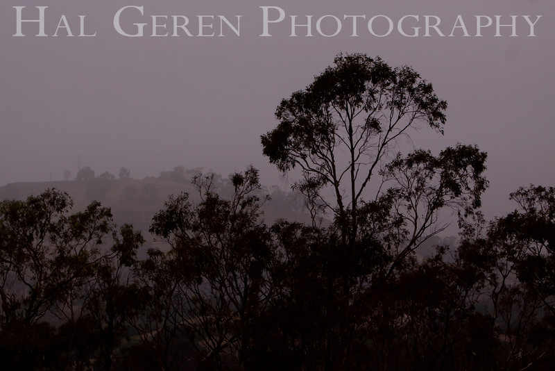 Foggy Morning<br /> Don Edwards Natl Wildlife Refuge, Fremont, California<br /> 0909R-FT1