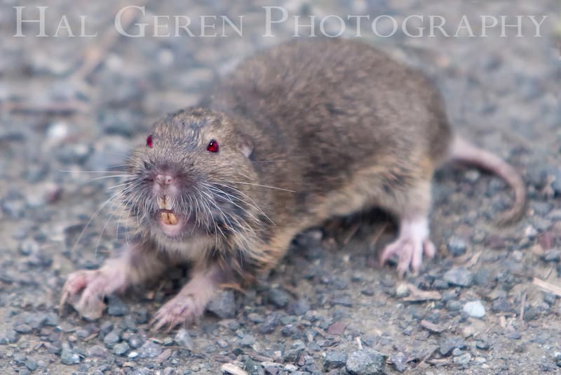 Back Off!!<br /> Don Edwards Natl Wildlife Refuge, Fremont, California<br /> March, 2009<br /> 0903R-G2E1