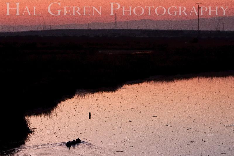 Sunrise Slough<br /> Don Edwards Natl Wildlife Refuge, Fremont, California<br /> January, 2009<br /> 0901R-SS1