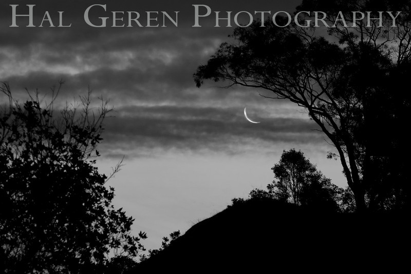 Moon in the Trees<br /> Don Edwards National Wildlife Refuge, Newark, CA<br /> 1002R-MIT1BW