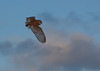 201008 Refuge - Barn Owl 3