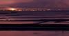 A Purple Haze<br /> Don Edwards National Wildlife Refuge, Newark, CA<br /> 1002R-SM3
