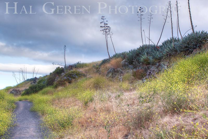 Back Hill<br /> Don Edwards National Wildlife Refuge, Fremont, CA<br /> 1006R-BHH1