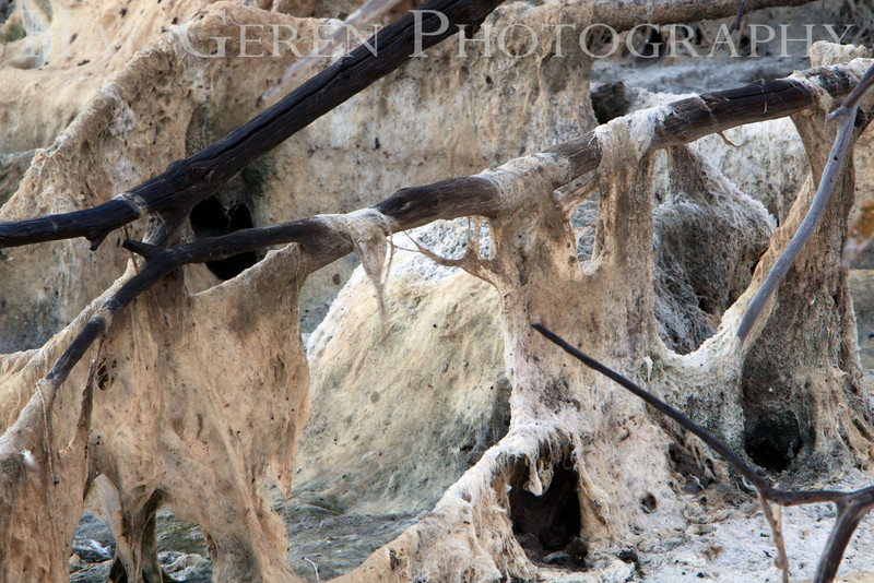Salt Pond Scum<br /> Don Edwards National Wildlife Refuge.  Fremont, CA<br /> 1009R-SPS1