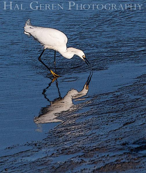 Snowy Egret<br /> Don Edwards National Wildlife Refuge, Fremont, CA<br /> 1006R-SN4