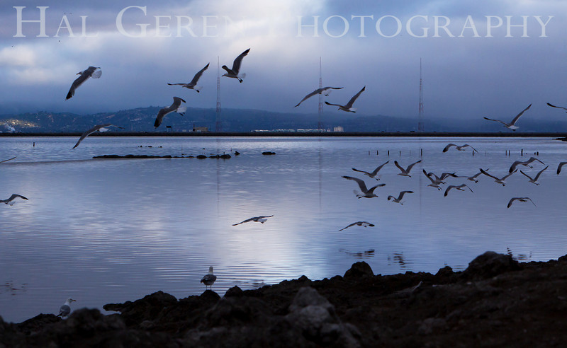 KGO Towers with Gulls<br /> Don Edwards National Wildlife Refuge, Fremont, CA<br /> 1006R-KGOTWG1