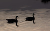 Duck Silhouettes<br /> Don Edwards National Wildlife Refuge, Fremont, CA<br /> 1004R-D1