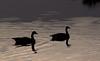 Duck Silhouettes<br /> Don Edwards National Wildlife Refuge, Fremont, CA<br /> 1004R-D1