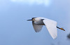 Snowy Egret Flight<br /> Don Edwards National Wildlife Refuge, Newark, CA<br /> 1001R-SEF1