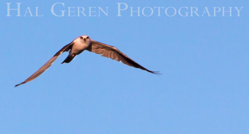 Kite Flight<br /> Don Edwards National Wildlife Refuge, Fremont, CA<br /> 1007R-KF3