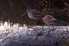 Don Edwards National Wildlife Refuge, Newark, CA<br /> 1003R-CR1