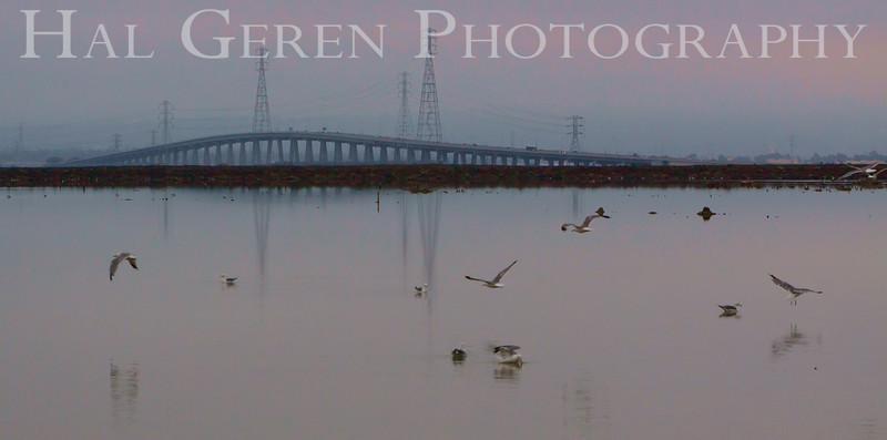 201008 Refuge - Dumbarton 1