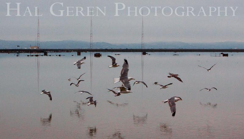 KGO Radio Towers<br /> Don Edwards National Wildlife Refuge.  Fremont, CA<br /> 1009R-KGOTAG1