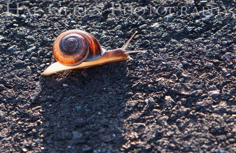 Backlit Snail<br /> Don Edwards National Wildlife Refuge, Fremont, CA<br /> 1004R-SB1