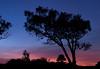 Top o' the Hill<br /> Don Edwards National Wildlife Refuge, Fremont, CA<br /> 1001R-H2