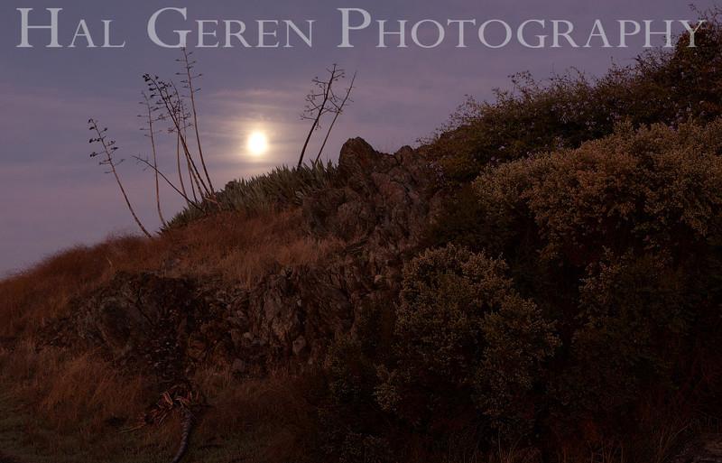 Moon Through Agave<br /> Don Edwards Natl Wildlife Refuge, Fremont, CA<br /> 1110R-AH2