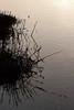 Don Edwards Natl Wildlife Refuge<br /> Fremont, California<br /> 1206R-GIW1