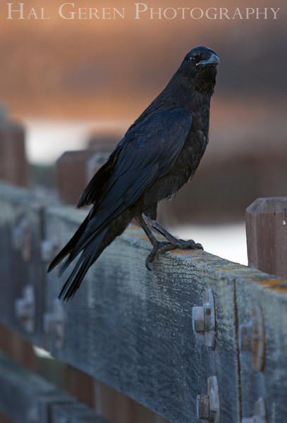 Don Edwards Natl Wildlife Refuge<br /> Fremont, California<br /> 1206R-C1