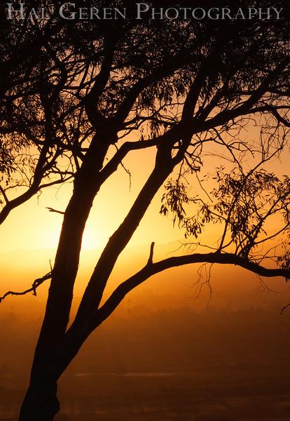 Don Edwards National Wildlife Refuge, Fremont, California<br /> 1209R-T2