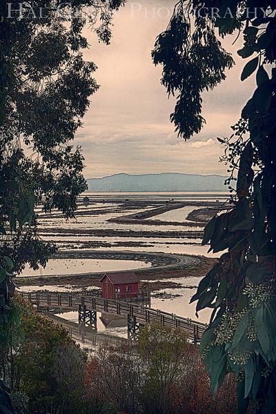Don Edwards National Wildlife Refuge, Fremont, California<br /> 1212R-RBH1AE1