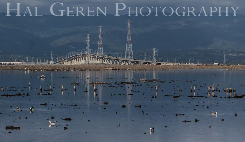 Dumbarton Bridge<br /> Don Edwards Natl Wildlife Refuge<br /> Fremont, California<br /> 1206R-D2