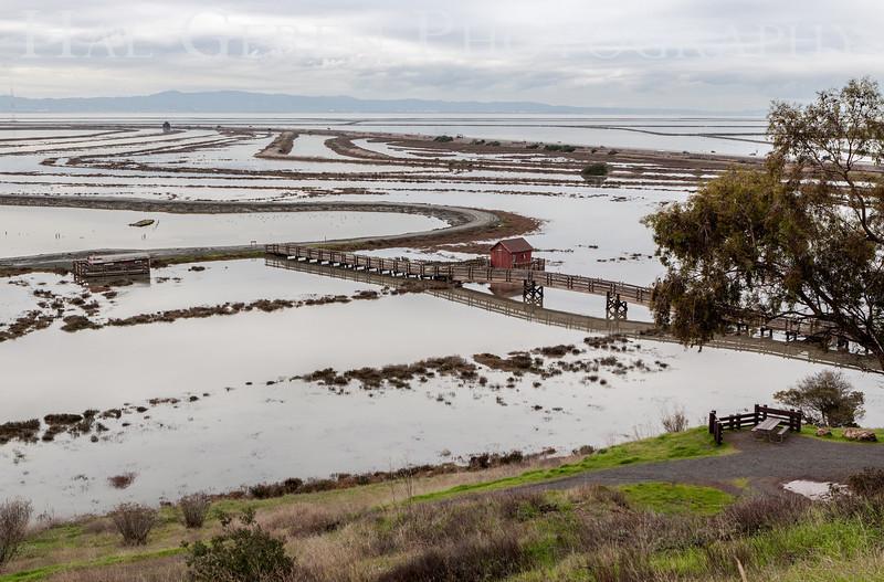 Yearly High Tide<br /> Don Edwards National Wildlife Refuge, Fremont, California<br /> 1212R-HT1