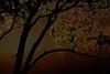Sunrise in a Tree<br /> Don Edwards National Wildlife Refuge, Fremont, California<br /> 1209R-T1E1