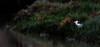 Black Crowned Night Heron<br /> Don Edwards Natl Wildlife Refuge<br /> Fremont, California<br /> 1206R-BCNH1
