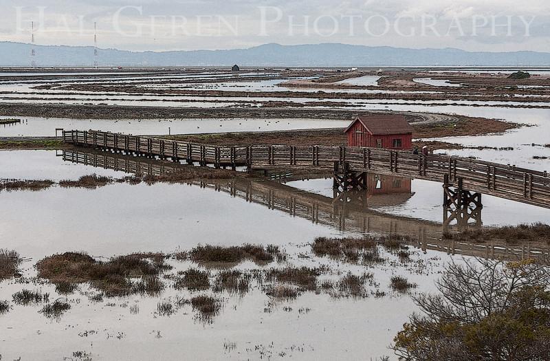 High Tide<br /> Don Edwards National Wildlife Refuge, Fremont, California<br /> 1212R-RB1