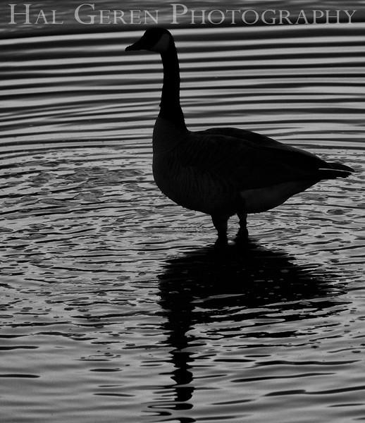 Don Edwards Natl Wildlife Refuge<br /> Fremont, California<br /> 1205R-G2A
