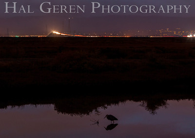 Two separate worlds Don Edwards National Wildlife Reserve Fremont, California 1310R-DM1
