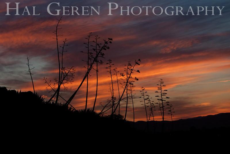 Century Plant Sunrise<br /> Fremont, California<br /> 1104R-CPS1
