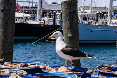 Gull in Port