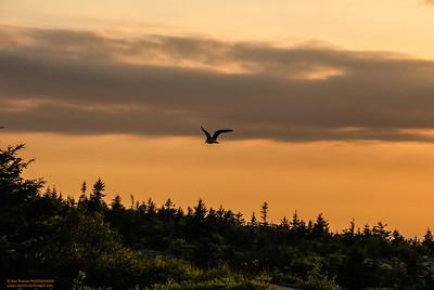 """Acadian Sentinel"" Cadillac Mountain Acadia National Park, Maine"