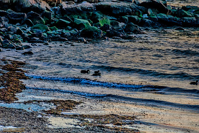 """Larry, Larry, Larry and Ralph"" Magnolia Beach Gloucester, Massachusetts"