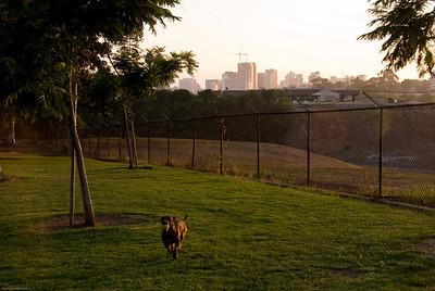 Skyline Pup