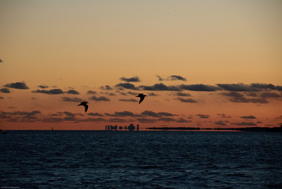 Gulls against Niles Beach Late Autumn Sky