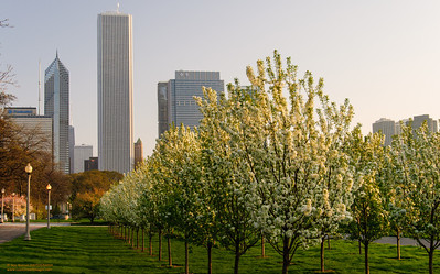 Waking Spring in Chicago