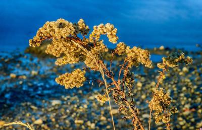 """Coastline Find"" - Kittery Point, Maine"