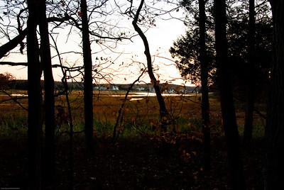 Essex Through the Trees