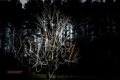 """""""Tree Goblin"""""""