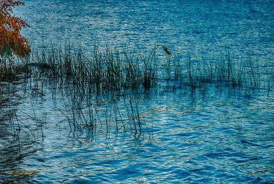 """""""Autumn Reeds"""""""