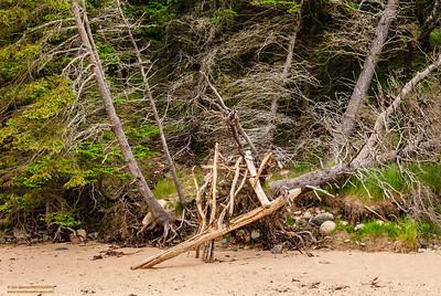 """Driftwood"""